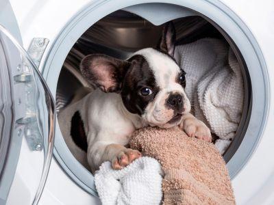 Нова універсальна пральна машина Samsung 4-в-1